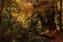 糺の森の紅葉は幽玄の趣だ
