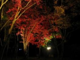 笠置山もみじ公園「もみじライトアップ」
