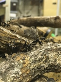 秋の鳴く虫と日本の昆虫展