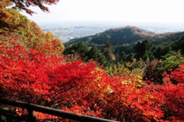 太平山もみじまつり