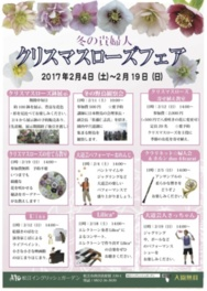 松江イングリッシュガーデン クリスマスローズフェア2017