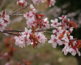 クイズラリー「春の花めぐり」