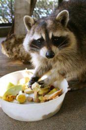 須坂市動物園 飼育の日