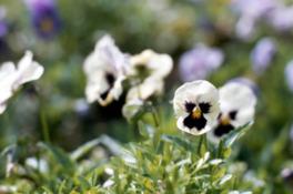 園芸講座~春の寄せ植え~