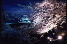 鶴ヶ城公園ライトアップ