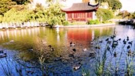 本牧市民公園 野鳥観察会