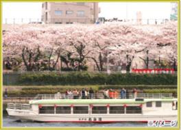 東京・隅田川 乗合屋形船  お花見ランチクルーズ