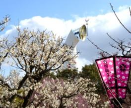 万博記念公園で梅が見ごろ