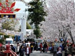朝日山森林公園桜まつり