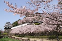 【桜・見頃】大村公園(二重馬場)