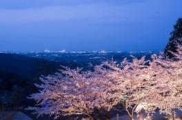 【桜・見ごろ】八面山登山道周辺