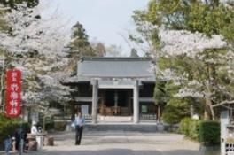 【桜・見ごろ】作楽神社