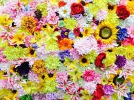 ゾウサンマルシェ~HANA MARCHE~ Flowers Heal The World