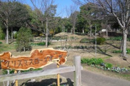 【花・見ごろ】国営明石海峡公園 クリスマスローズ