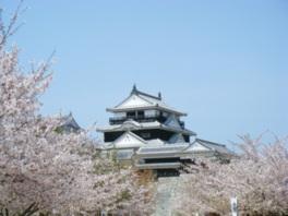 【桜・見頃】松山城(城山公園)