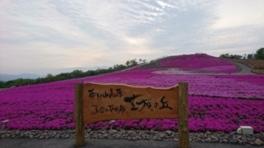 2017 茶臼山高原「芝桜まつり」