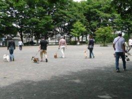 善福寺川緑地「犬のしつけ方教室」