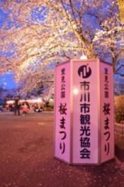 里見公園桜祭り