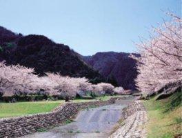 【桜・見ごろ】羽根谷だんだん公園