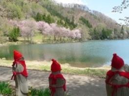 【桜・見ごろ】中綱湖