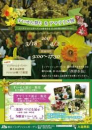 松江イングリッシュガーデン すいせん祭り&アマリリス展2017
