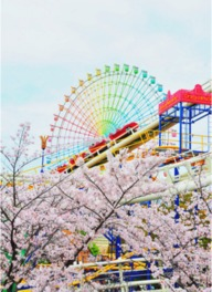 【桜・見頃】ひらかたパーク
