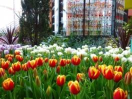 チューリップ四季彩館常設展「季節を彩る花々 春の色」