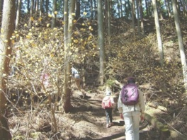 早春の里山 みつまたの森ウォーキング
