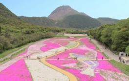 しまばら芝桜公園「春の花まつり」