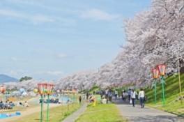 2017 岡山さくらカーニバル
