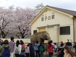 お花見で入園無料!(姫路市立動物園)