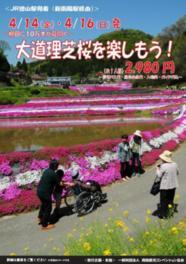 大道理芝桜を楽しむツアー