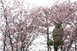 円山動物園GWイベント