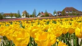 【花・見ごろ】滋賀農業公園ブルーメの丘 チューリップ
