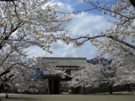 【桜・見ごろ】松代城跡