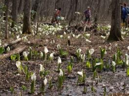 小岩井農場で春休み