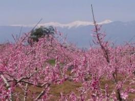 浅間園 桃の花まつり2017