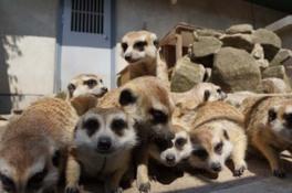 市川市動植物園「飼育の日」特別企画 飼育員が教える動物エピソード