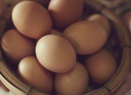第21回生産者トーク「北坂養鶏場の卵を使って料理教室&絵を描こう」