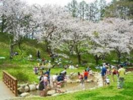 【桜・見ごろ】アルプス公園