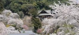長谷寺で特別拝観