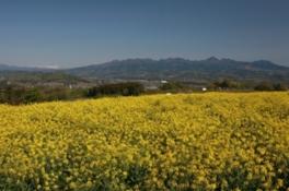 鼻高展望花の丘 菜の花まつり