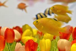 春爛漫水槽
