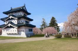 散り際まで人々を魅了する弘前公園の桜
