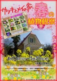 「サツキとメイの家」春の植物観察