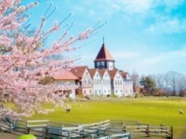 クローネンベルク 桜まつり