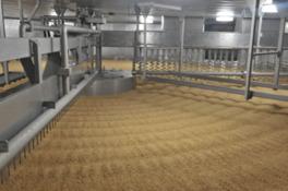 蒸した大豆と炒った小麦にこうじ菌を加え、しょうゆこうじをつくる、重要な工程だ