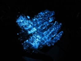 神秘の光 ウミホタル観察ツアー