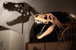 恐竜ナイトツアー