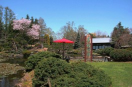 満開の桜と日本庭園が風流な春の風景
